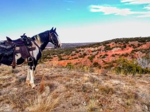 Missouri Fox Trotter Vision's Enduring Freedom W Reaches 400 Credit Level
