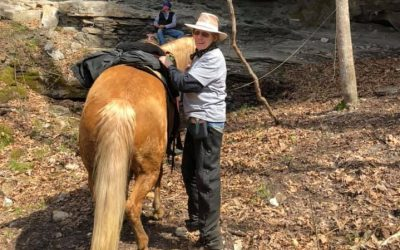 Missouri Fox Trotter Hammer Reaches 400 Credit Level